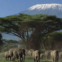 5-Four days 3 nights Amboseli, Lake Naivasha, Lake Nakuru Tour
