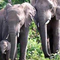6 Days Amboseli /Tsavo West/Tsavo East Mombasa Luxury Lodge Safari Tour