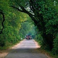 Day Tours Bharatpur