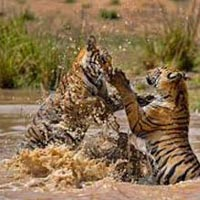 Bandhavgarh Trip Package