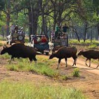 Kanha Tour From Nagpur