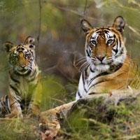 Exotic Madhya Pradesh Tour