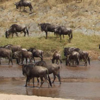 7 Days African Safaris, Tanzania Wildlife Safaris Tour