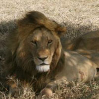 Tanzania Wildlife Safaris, Camping Safaris 10 Days Package