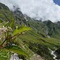 Valley Of Flowers Ex Dehradun Package
