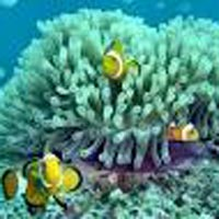 Andaman Tour Package 20