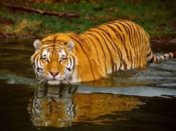 Sundarban Forest and Tiger Den Tour