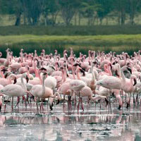 4 Nights / 5 Days Kenya Bird Watching Safari