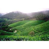 Enchanting Kerala Package