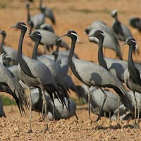 Gujarat Bird Watching Tour