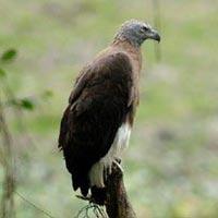 Birding in North East India & West Bengal Tour