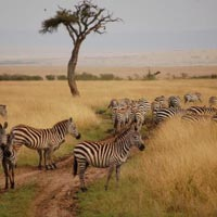 10 Days Kenya Bush and Beach Holiday Package