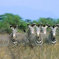 4 Days Ol pejeta Conservancy and Meru National park safari Tour