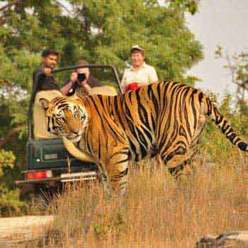Jungle India Tour Package
