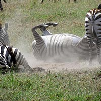 Four Days Three Nights Lake Naivasha Tour