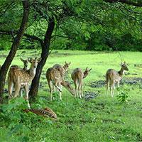 Madhya Pradesh Delights, (4N/5D) 3 Star , Ex - Orchha Tour
