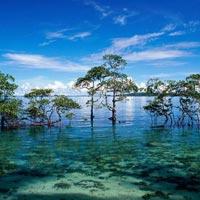 Fascinating Andaman Tour