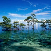 Andaman With Baratang Day Trip 6N/7D (Summer Special) Tour