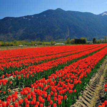 Enchanting Kashmir 6 Days Package