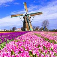Amsterdam Brussels Bruges Tulip Special 5N/6D Tour