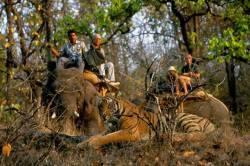 Mp Wildlife Tours