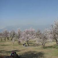Kashmir with Amritsar Tour, 10Nights - 11Days