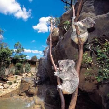 Sydney & Its Surroundings Tour