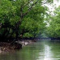 Stay With Tigers of Sunderban Tour