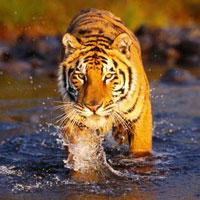 Delhi - Corbett National Park - Delhi