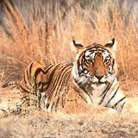 8 Days Tiger Wildlife Tour