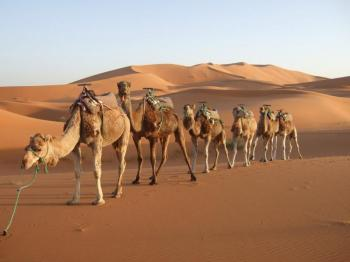 Rajasthan Camel Safari Package