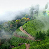 Splendours of Kerala - Premium Package