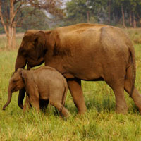 Wildlife Tour with India and Nepal