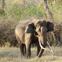Wildlife Tour South India