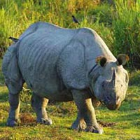 The Rhino Land Package