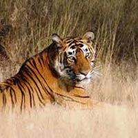 Panna Wildlife Safari Tour