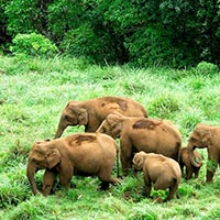 Wildlife In South India Tour