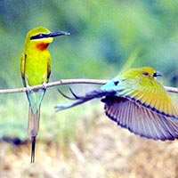 The Wild Adventure South India Tour Packages