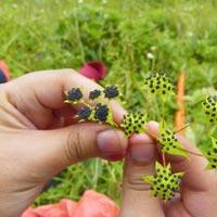 Trekking Program in Valley of Flowers