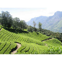 India - Kerala Honeymoon Tours