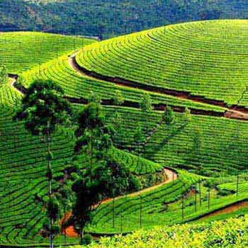 Wonderful  Ooty Trip Package