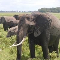 3-Day Romantic Getaway to Amboseli Serena Tour