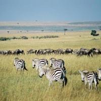 3-Day Mara Getaway Tour
