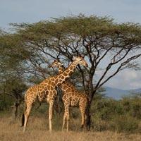 7-Day Safari Explore Kenya Tour