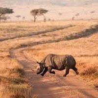 3-Day Samburu Escape and Retreat Tour