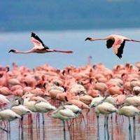 7-Day Scenic Kenya Road Safari Tour