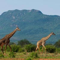 4-Day Tsavo Safari Tour