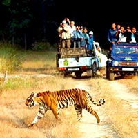 Jim Corbett 2 Nights and 3 days