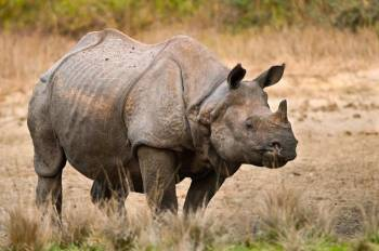 Tour to Land of One Horned Rhino Package