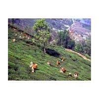 Darjeeling - Kalimpong - Sikkim Tour